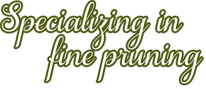Specializing in fine pruning
